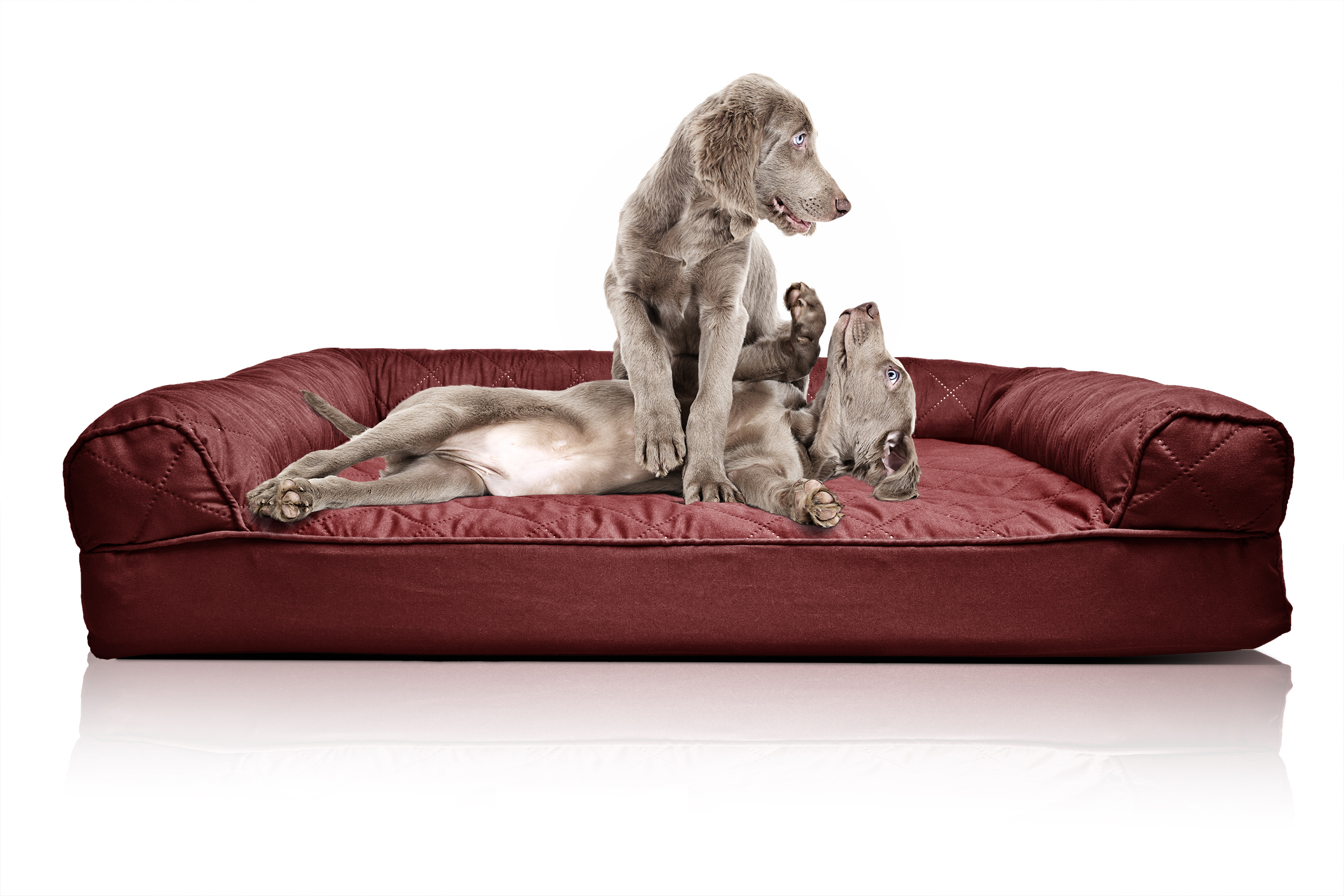 orthopedic sofa sacha large leather bed furhaven quilted dog pet ebay