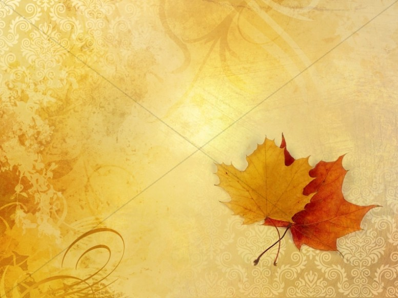 Fall Leaves Wallpaper Powerpoint Background Harvest Community Drive Church Flyer Template Flyer