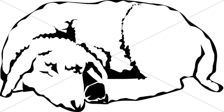 The Sleeping Lamb in Black and White