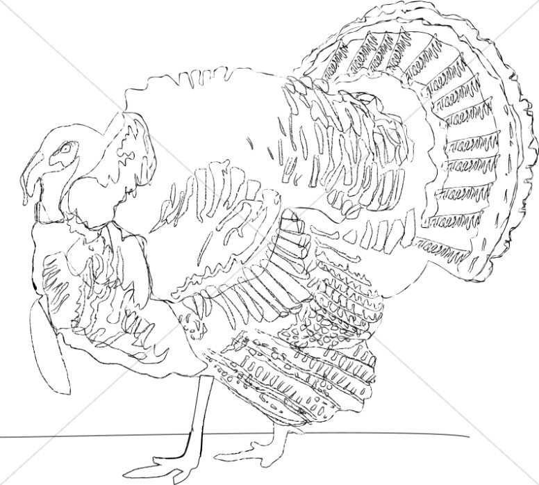 Detailed Turkey Line Drawing