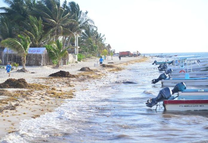They plan to attack the sargassum about five kilometers from the coast.  (Karim Moisés / SIPSE)