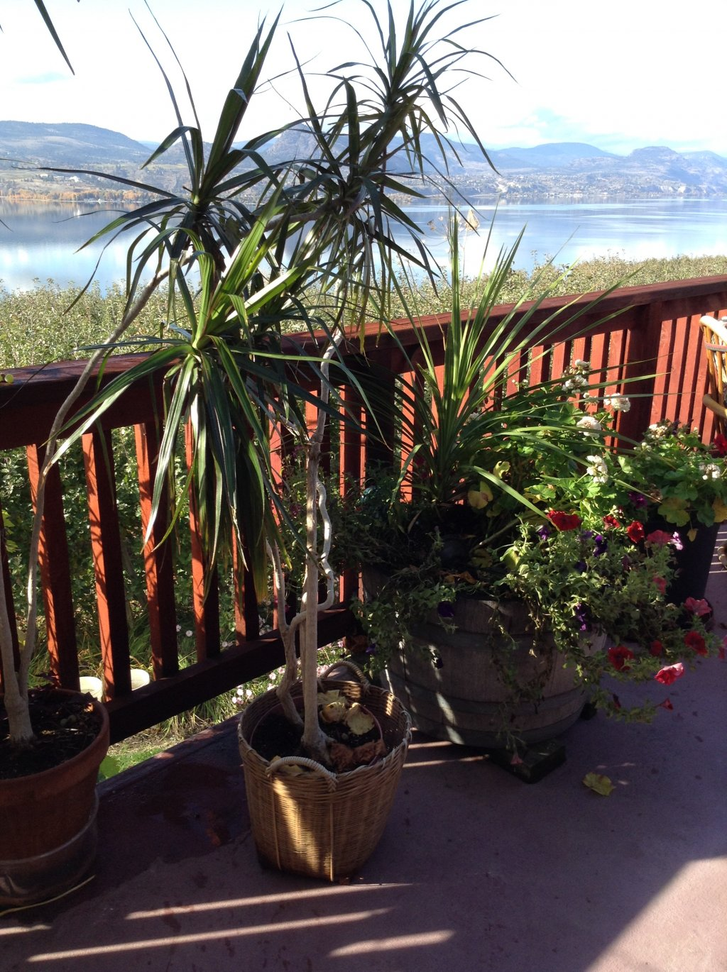 House plant for sale in Penticton BC  Skahaca