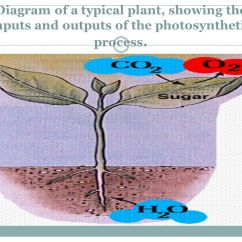 Diagram With Inputs And Outputs Of Photosynthesis Process 1999 Nissan Altima Engine University Khartoum Institute Environmental Sciences Dip M Sc 31 A Typical Plant Showing The Photosynthetic