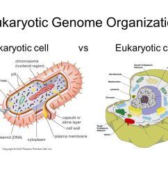 2 eukaryotic genome organization prokaryotic cell vs eukaryotic cell [ 1058 x 793 Pixel ]
