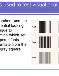 patterns used to test visual acuity in infants researchers use the preferential looking technique determine which set of stripes differentiate also chapter physical development body brain and perception rh slideplayer