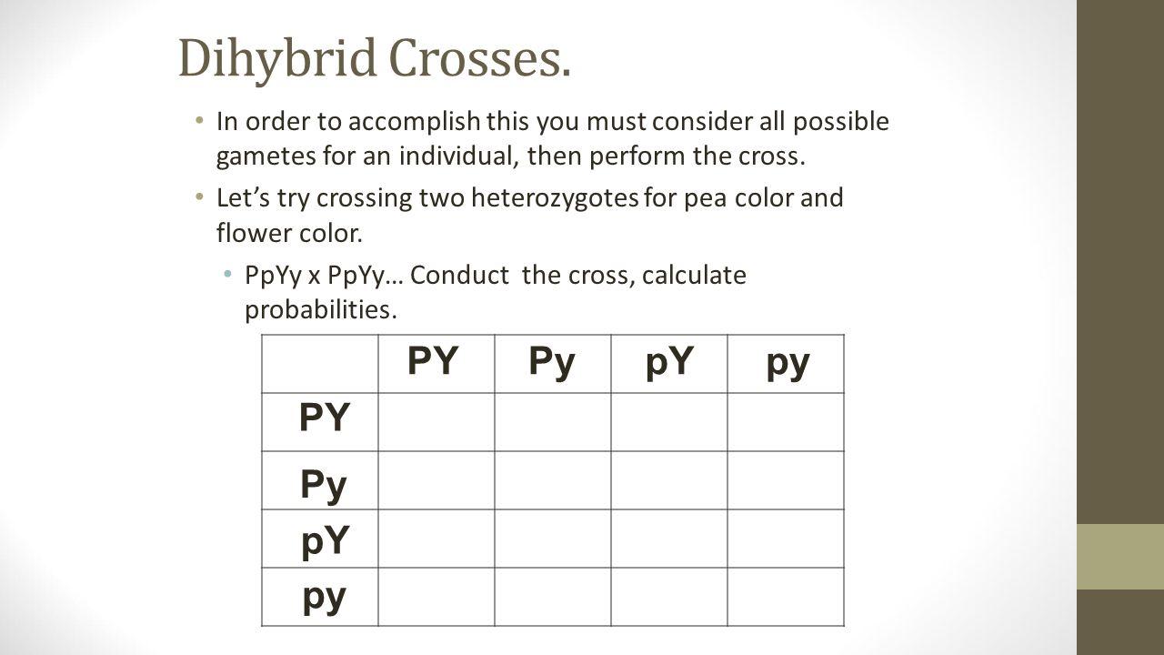 Worksheets Dihybrid Cross Worksheet dihybrid cross punnett square worksheet free worksheets library ge ics quiz m d y j nu ry 26 ttrr x ttrr