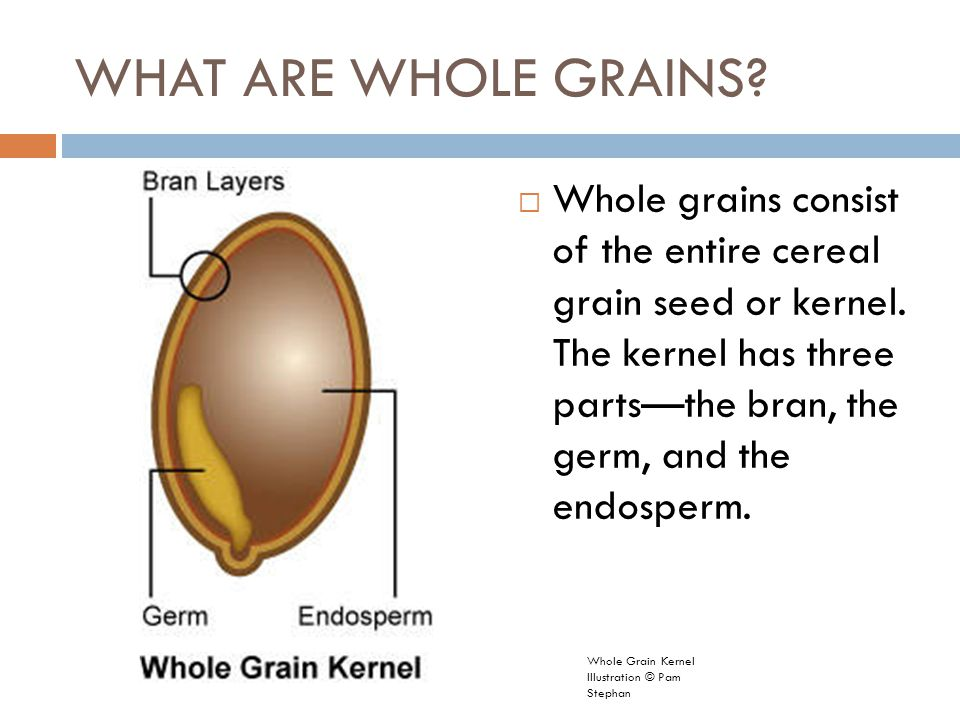 grain kernel diagram marine battery wiring 2 what are whole grains consist of the entire cereal seed or