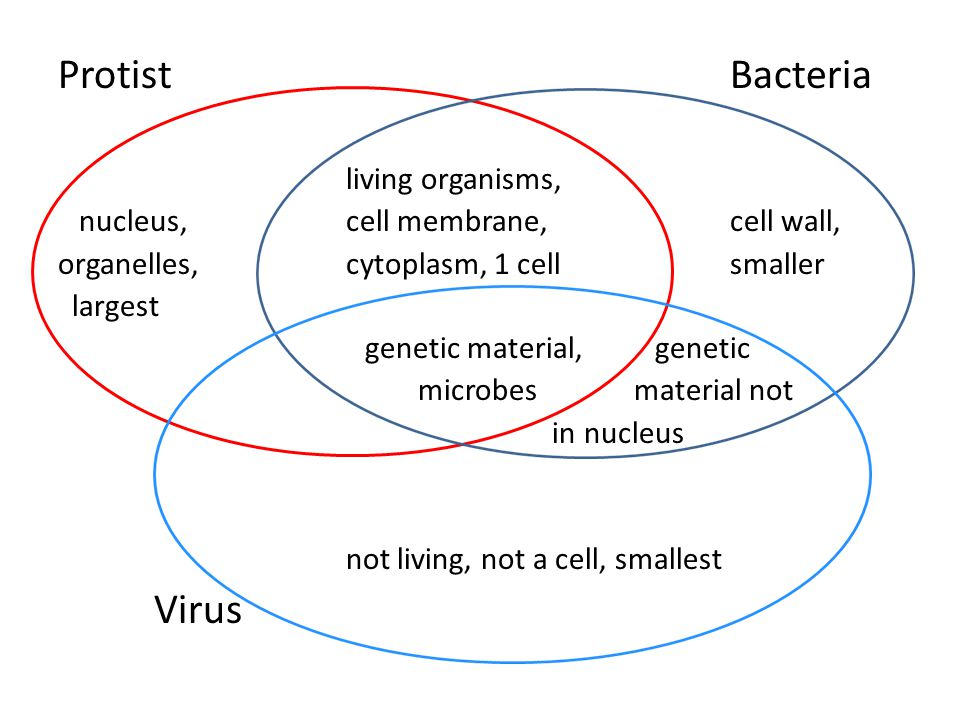 eubacteria and archaebacteria venn diagram basic ignition coil wiring rh drdiagram com protist