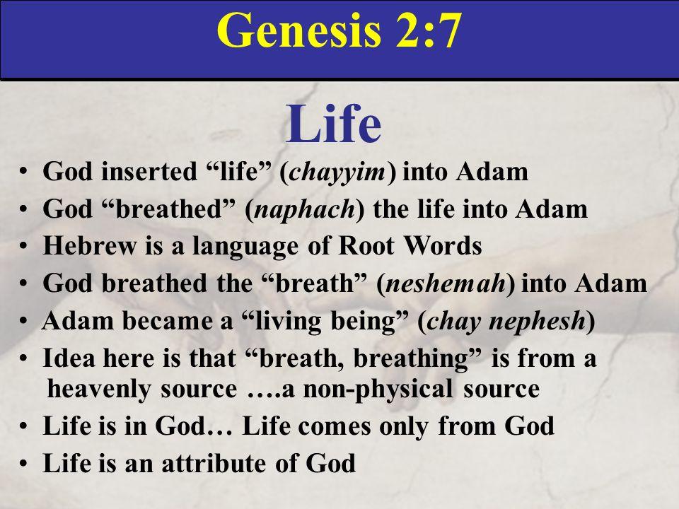 Image result for gen 2 7