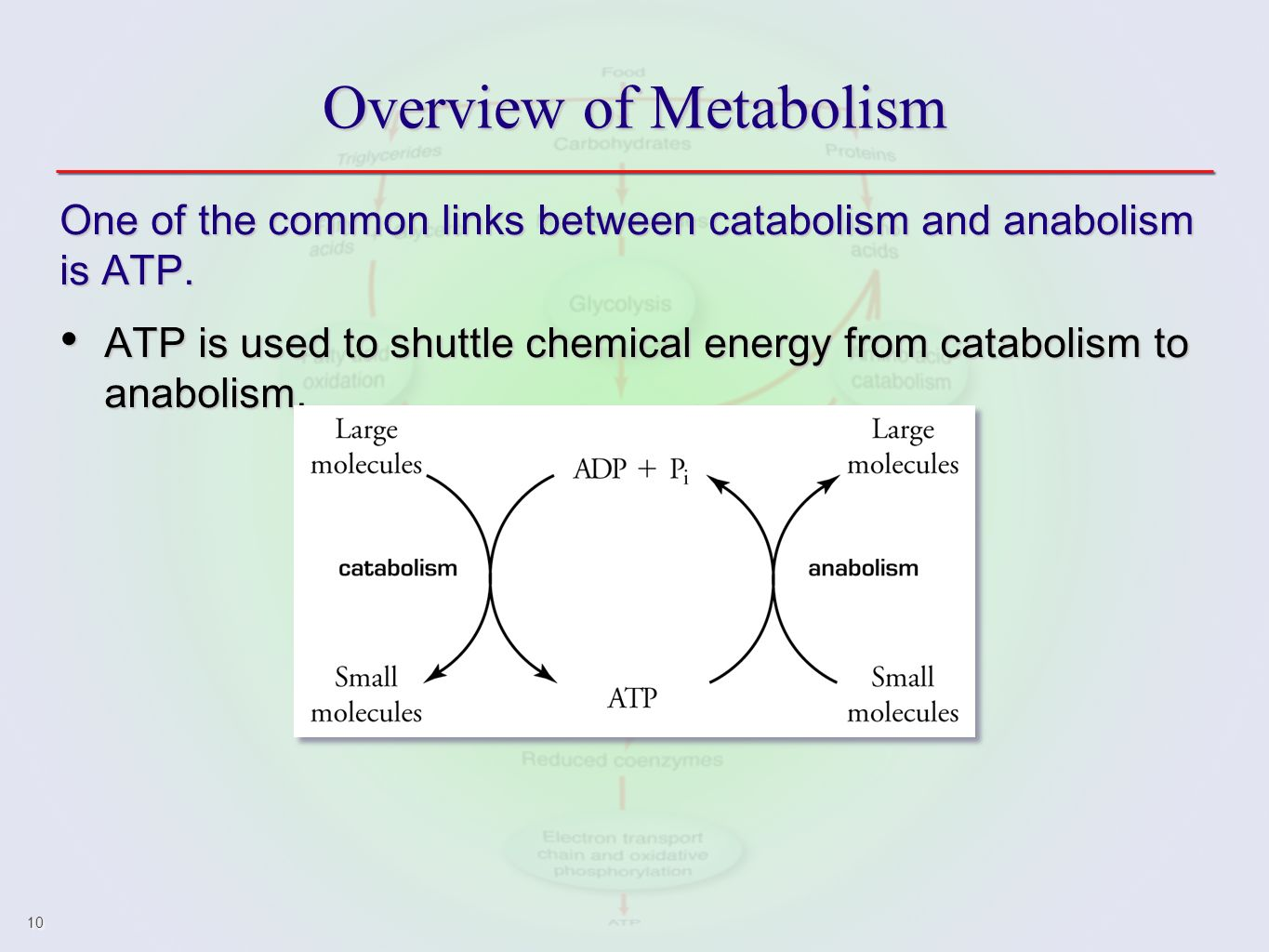 hight resolution of 10 overview of metabolism one of the common links between catabolism and anabolism is atp