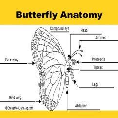 Butterfly Anatomy Diagram 01 Chevy Cavalier Radio Wiring Presented By Elizabeth Blaikie Ppt Download 2