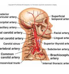 5 external jugular vein  [ 1066 x 800 Pixel ]