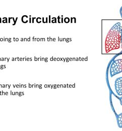 3 pulmonary circulation all vessels going to and from the lungs two pulmonary arteries bring deoxygenated blood to lungs four pulmonary veins bring  [ 1280 x 720 Pixel ]