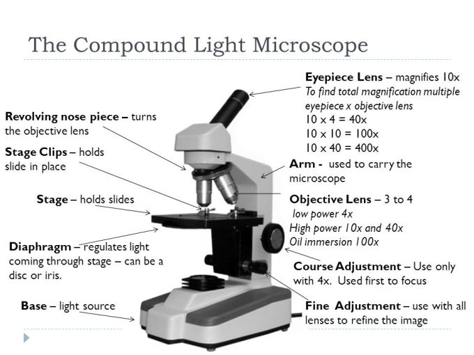 Compound Light Microscope Objective Lens Magnification