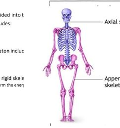 6 the skeleton the skeleton is divided into two parts the axial and appendicular skeleton axial skeleton includes skull vertebral column sternum  [ 1280 x 720 Pixel ]