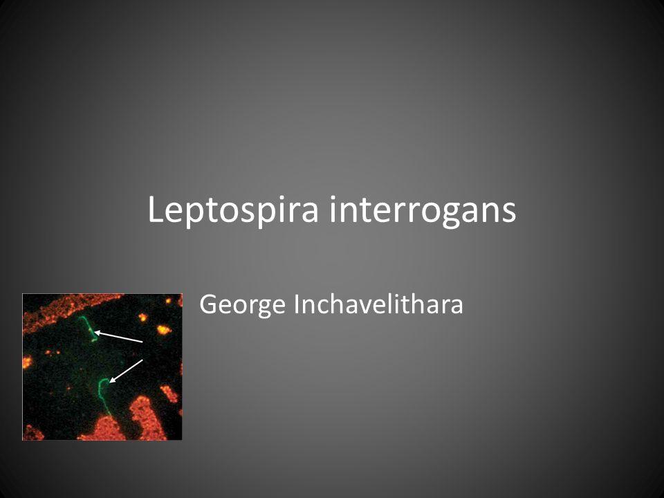 Αποτέλεσμα εικόνας για LEPTOSPIRA INTERROGANS..