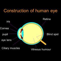 Human Eye Diagram Blind Spot Glow Plug Wiring 7 3 Construction Of Iris Pupil Cornea Aqueous Humour Lens 2