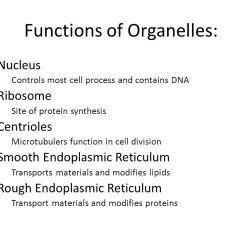 Endoplasmic Reticulum Animal Cell Diagram 97 Club Car Wiring Nucleolus Nucleus Ribosome Membrane 3 Functions