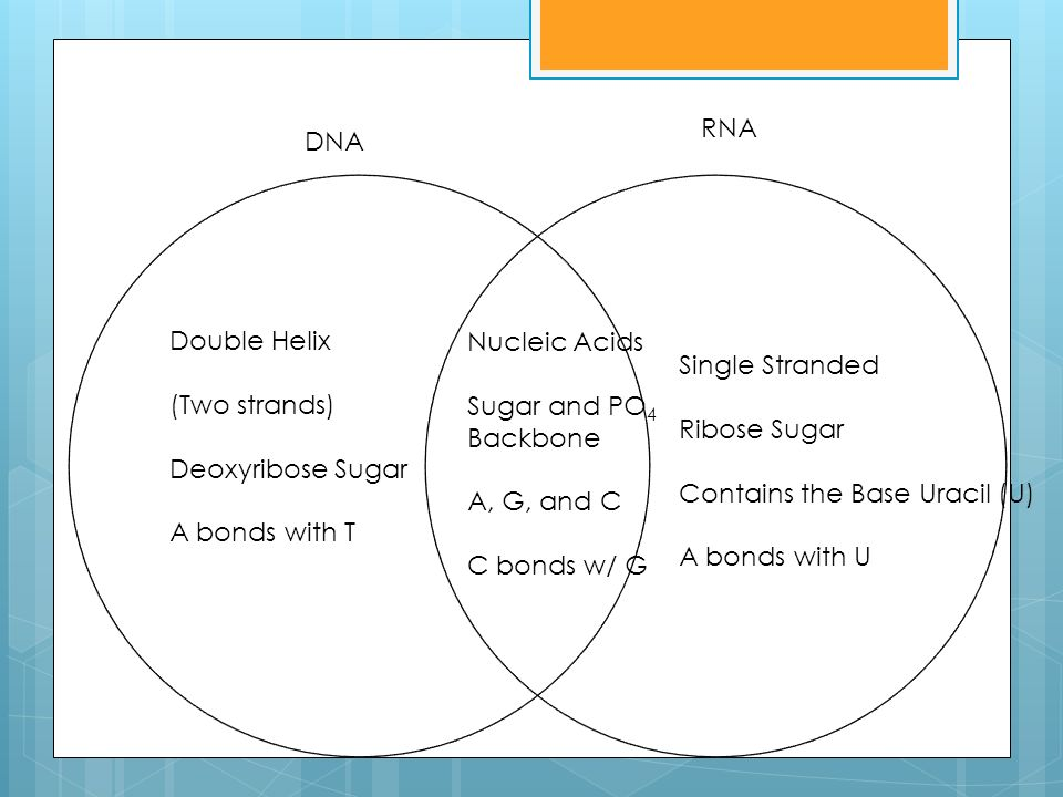venn diagram comparing dna and rna cat 5 telephone wiring think write use a to compare contrast the 2