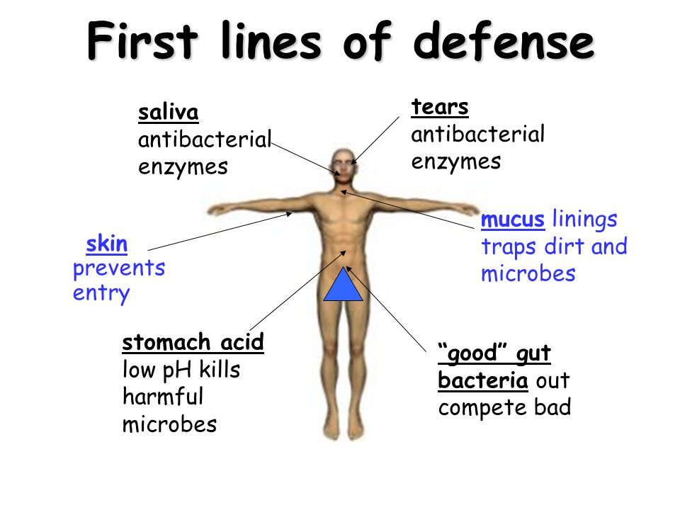 Image result for first line of defense in the immune system