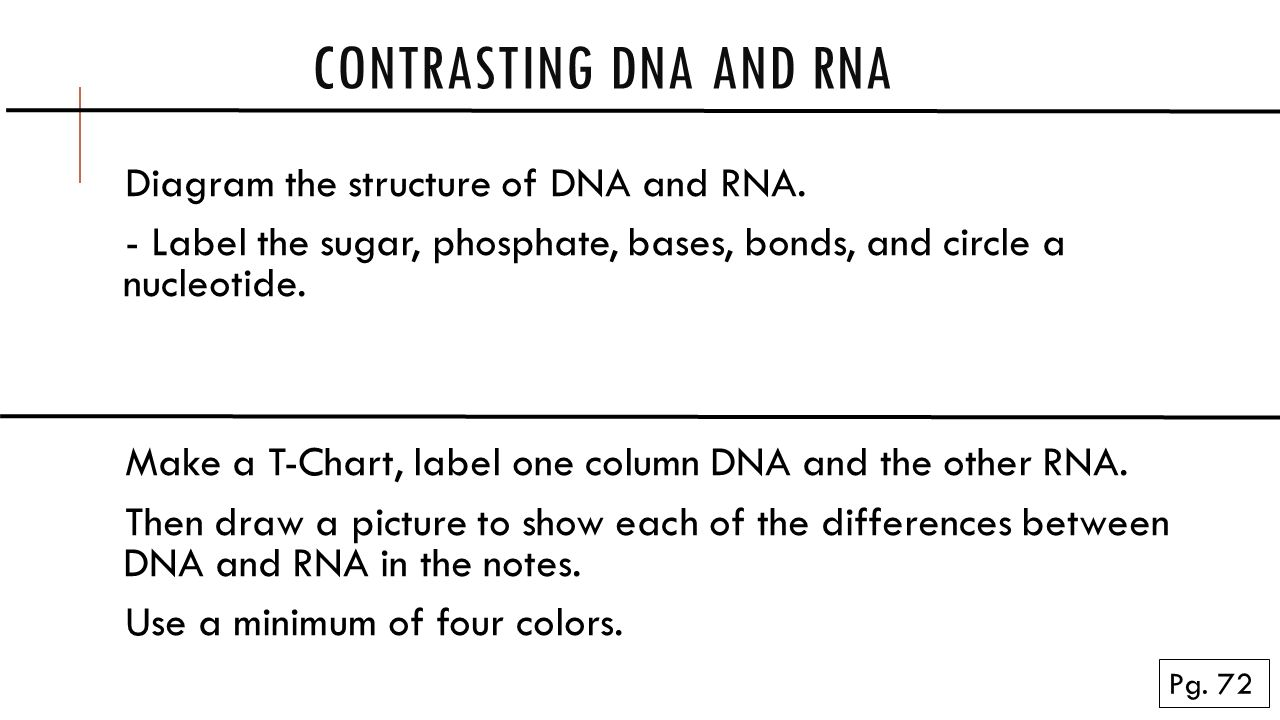 hight resolution of contrasting dna and rna pg 72 diagram the structure of dna and rna