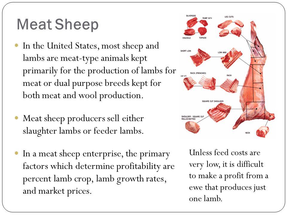 sheep raising sheep sheep