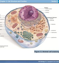 unit a cell biology chapter 2 the molecules of cells chapter 3 mcgraw hill plant and animal cells animal cell diagram mcgraw hill [ 1066 x 800 Pixel ]
