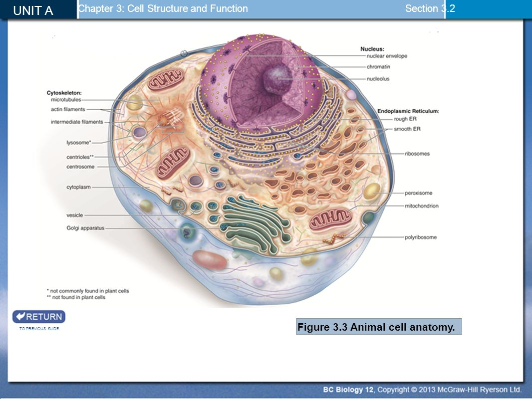 hight resolution of unit a cell biology chapter 2 the molecules of cells chapter 3 mcgraw hill plant and animal cells animal cell diagram mcgraw hill