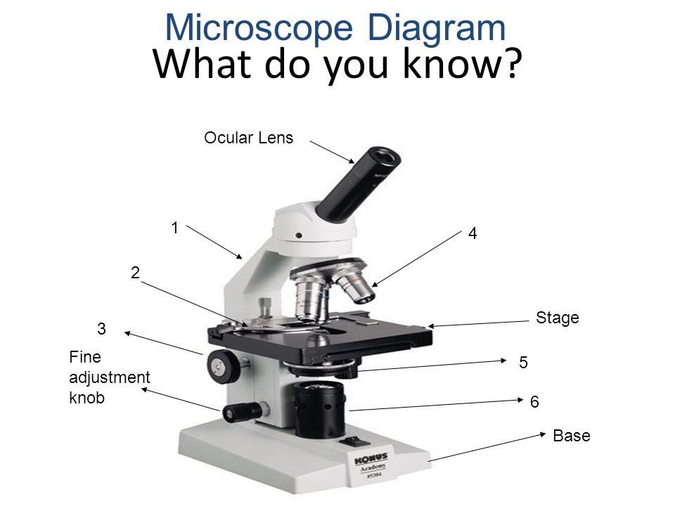 simple microscope diagram transfer switch tools of the biologist magnifying glass light 3 what