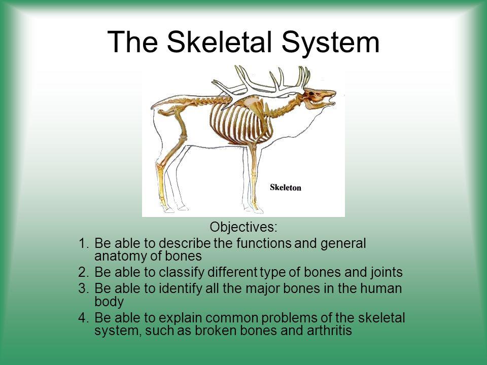 Skeletal System Different Types Of Bones