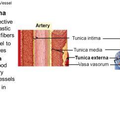 6 fig 23 1 walls of a blood vessel  [ 1280 x 720 Pixel ]