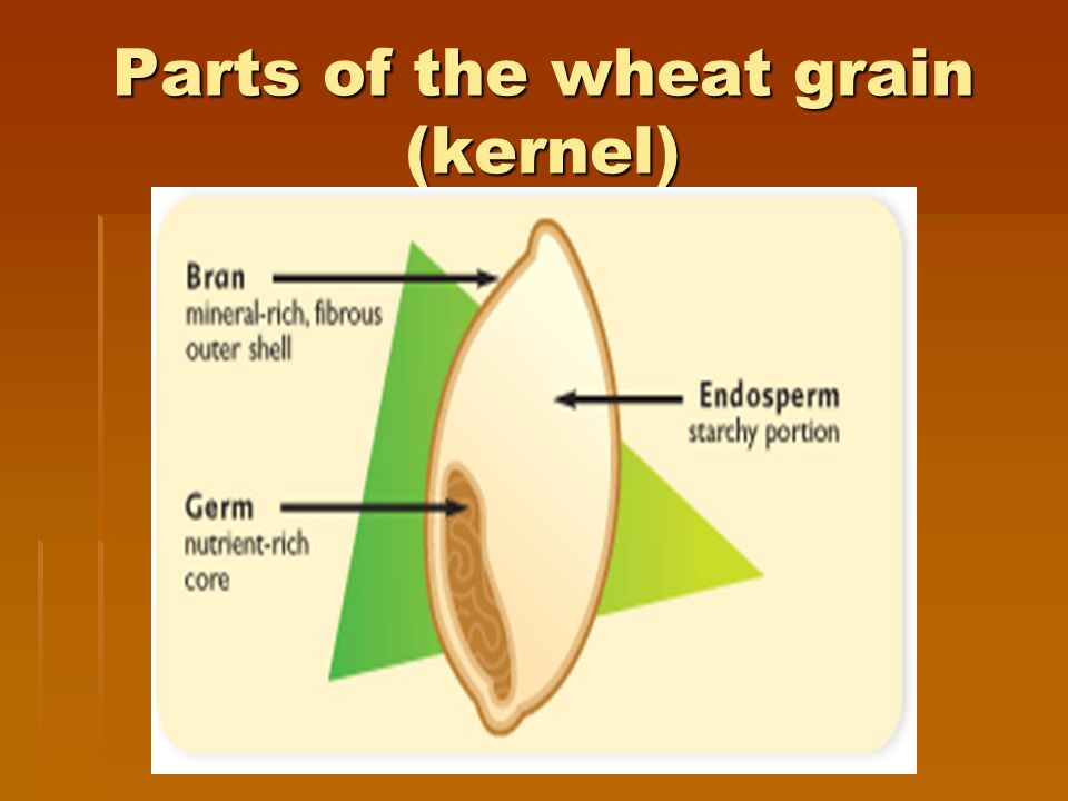 grain kernel diagram heart nodes grains are the edible kernels of plants in grass family 3 parts wheat