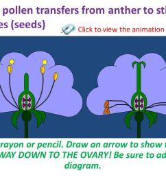 9 pollination  [ 1280 x 720 Pixel ]