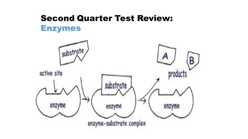 medium resolution of 6 second quarter test review eukaryotic vs prokaryotic cells eukaryotes animal and plant cells they have a nucleus mitosis linear dna organelles