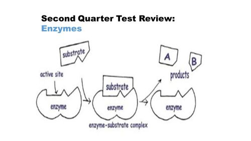 small resolution of 6 second quarter test review eukaryotic vs prokaryotic cells eukaryotes animal and plant cells they have a nucleus mitosis linear dna organelles