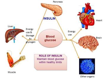 What to Know About Nutrition - Role of Insulin