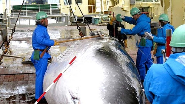 whaling decision