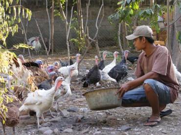 Joko Wahyulianto dan hewan ternaknya (JIBI/Harian Jogja/Rina Wijayanti)