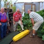 Phillip (paling kanan) dibantu saudaranya untuk mengangkat mentimun. (Istimewa/Wales/Online)