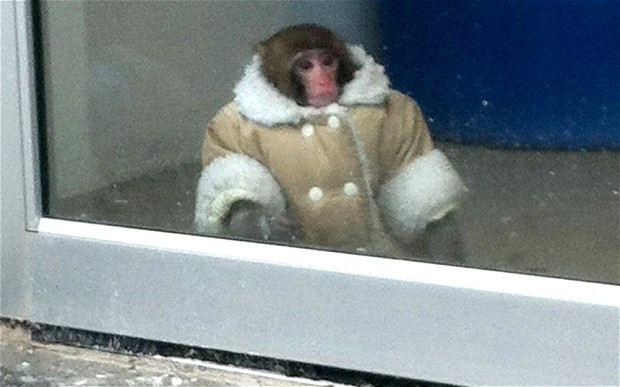 The GeoMonkey never had a meme. You left him behind.