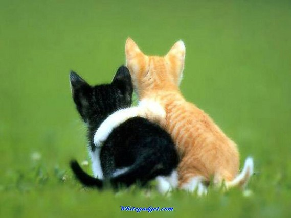Adopting pets