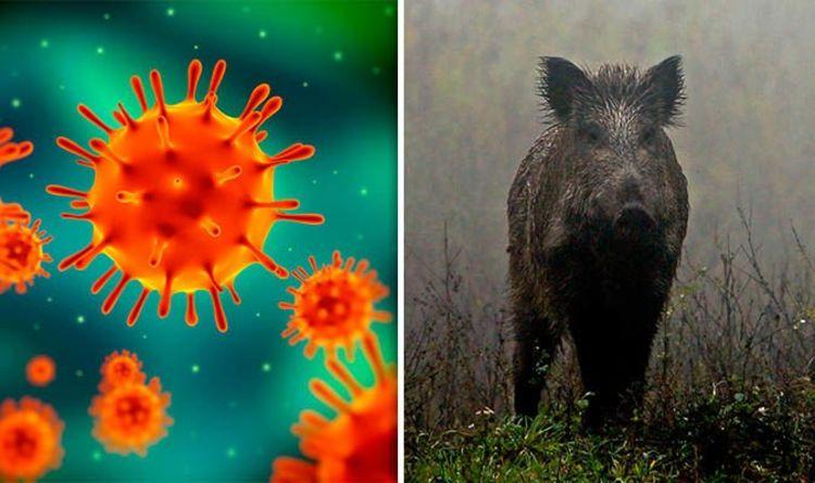Swine flu symptoms: How long does Swine Flu last? Is it contagious ...