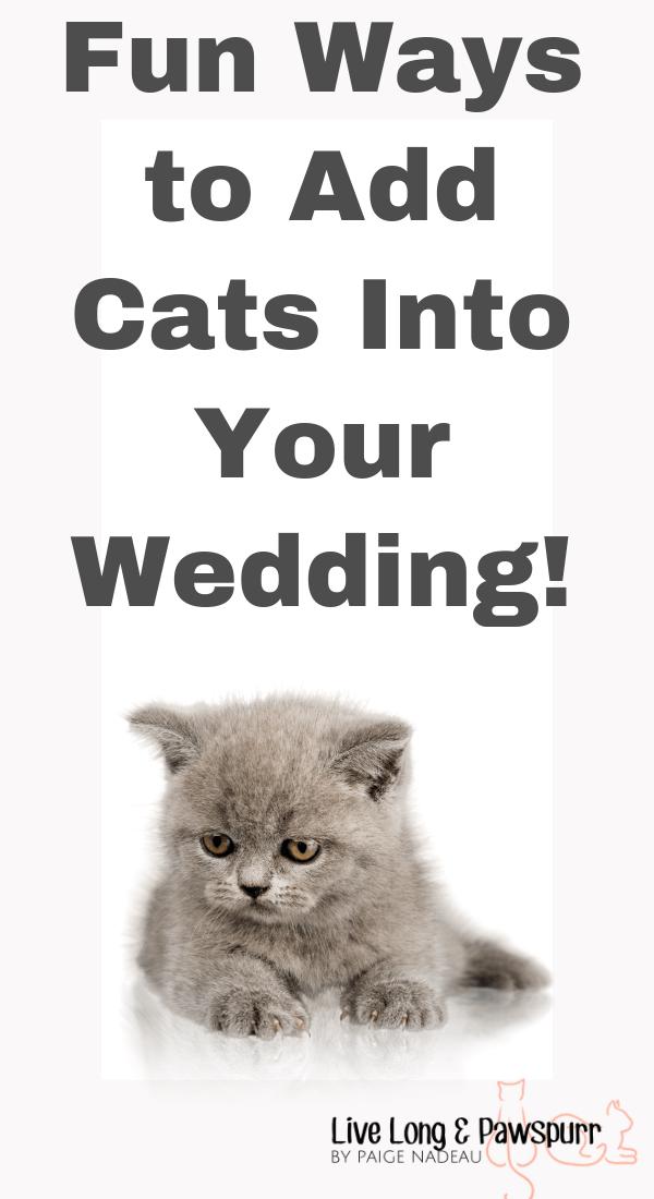 "Add Cats To Wedding"" class="