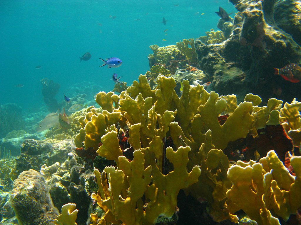 bahamas climateandreefs