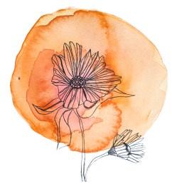 chakra flower wisdom cards [ 1000 x 925 Pixel ]