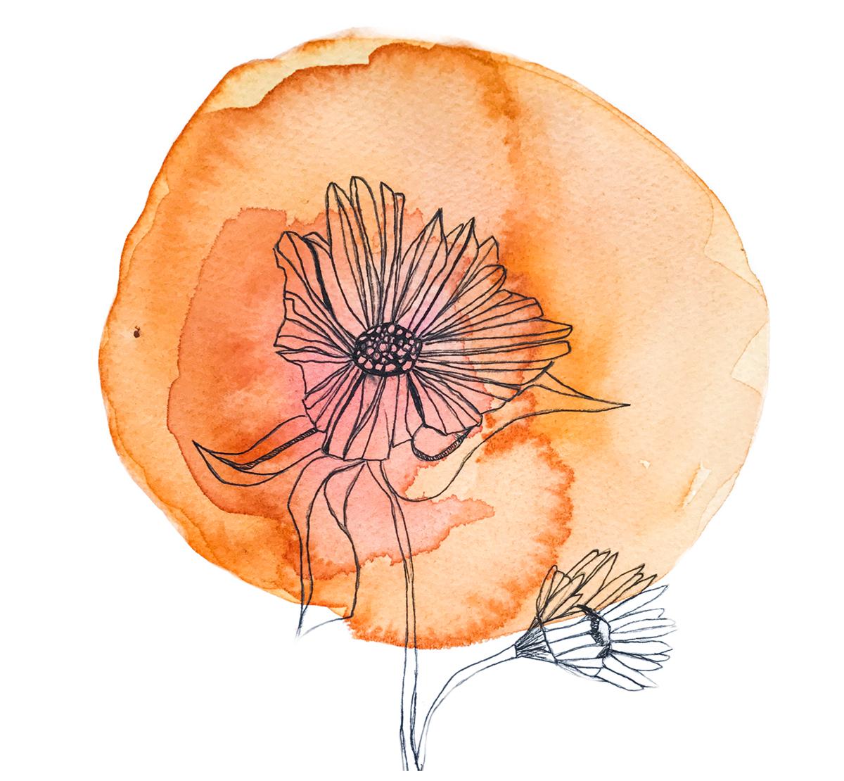 hight resolution of chakra flower wisdom cards