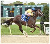 Carpe Diem takes Tampa Bay Derby