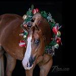 Terri Cage Photography Senior Portraits Equine North Texas