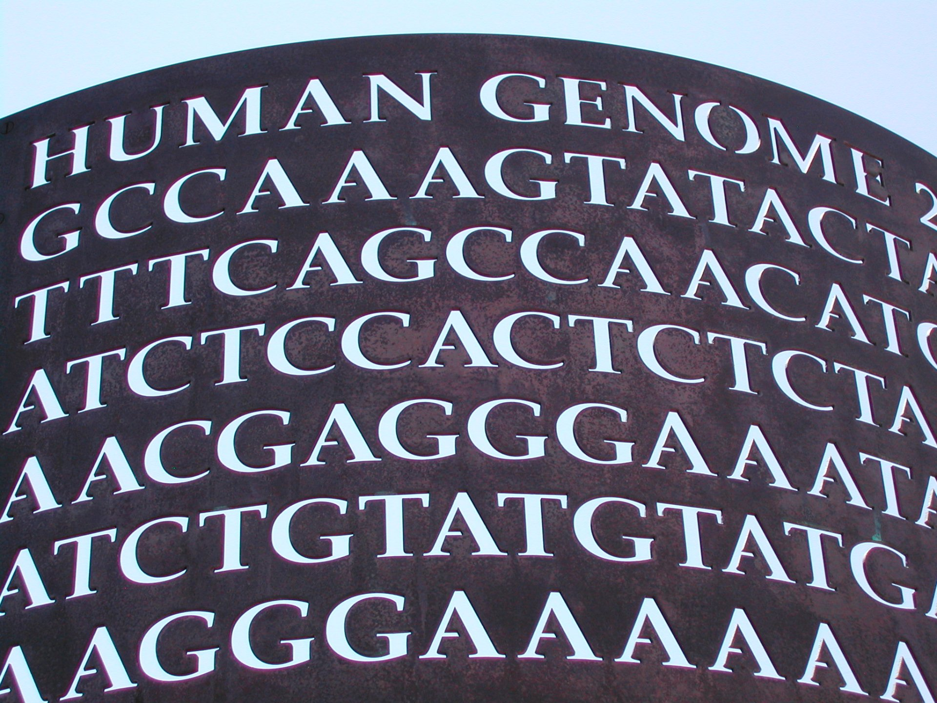 The Human genome project would have once seemed impossibleCredit:  Tom Purcell