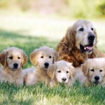 Best Gifts For Your Dog Loving Mother Dan S Dog Walking And Pet Sitting